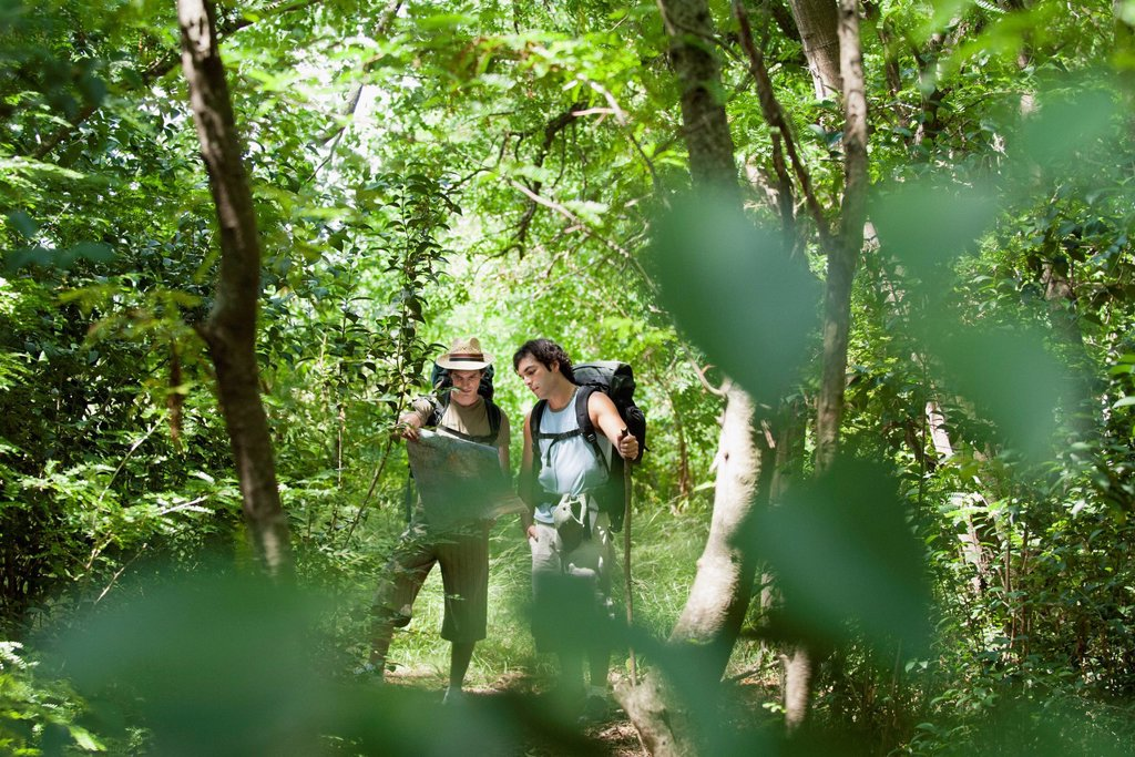 Hikers looking at map in forest : Stock Photo