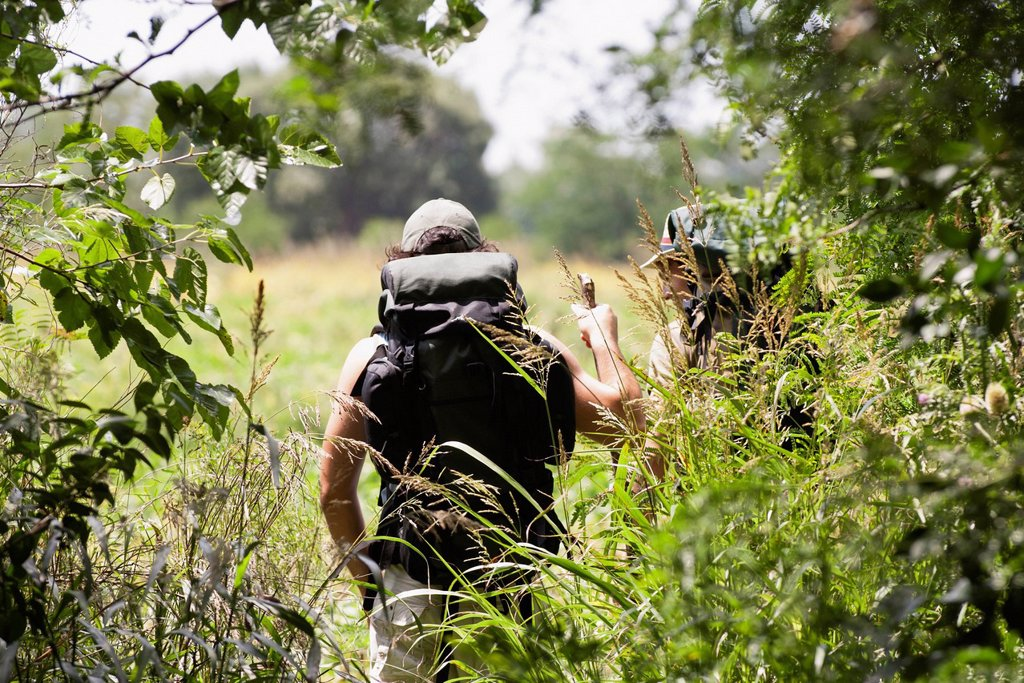 Stock Photo: 1569R-9079555 Hikers in woods, seen though tree branches, rear view