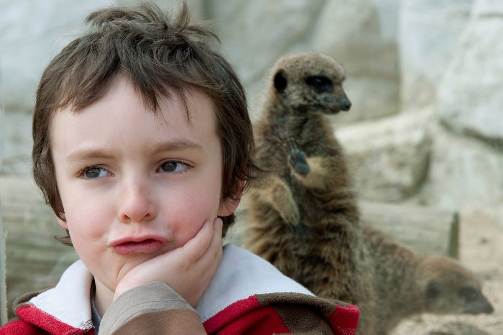 Boy in front of meerkat exhibit at the zoo : Stock Photo