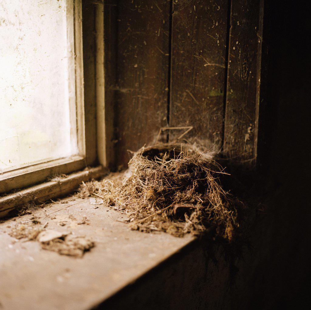 Stock Photo: 1570R-0458 A bird's nest on a windowsill