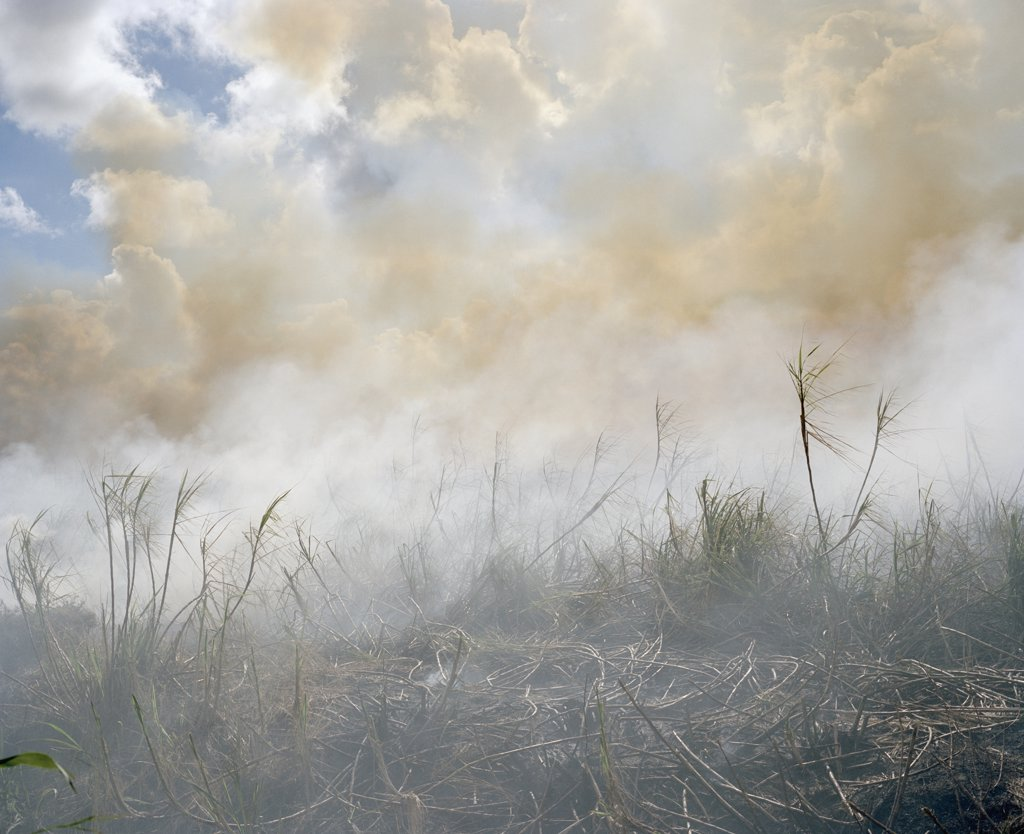 The aftermath of a brush fire : Stock Photo