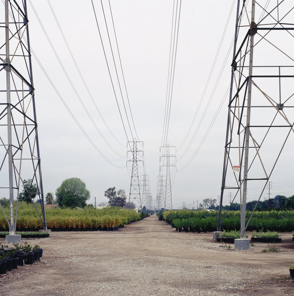 Power lines above plant nursery : Stock Photo