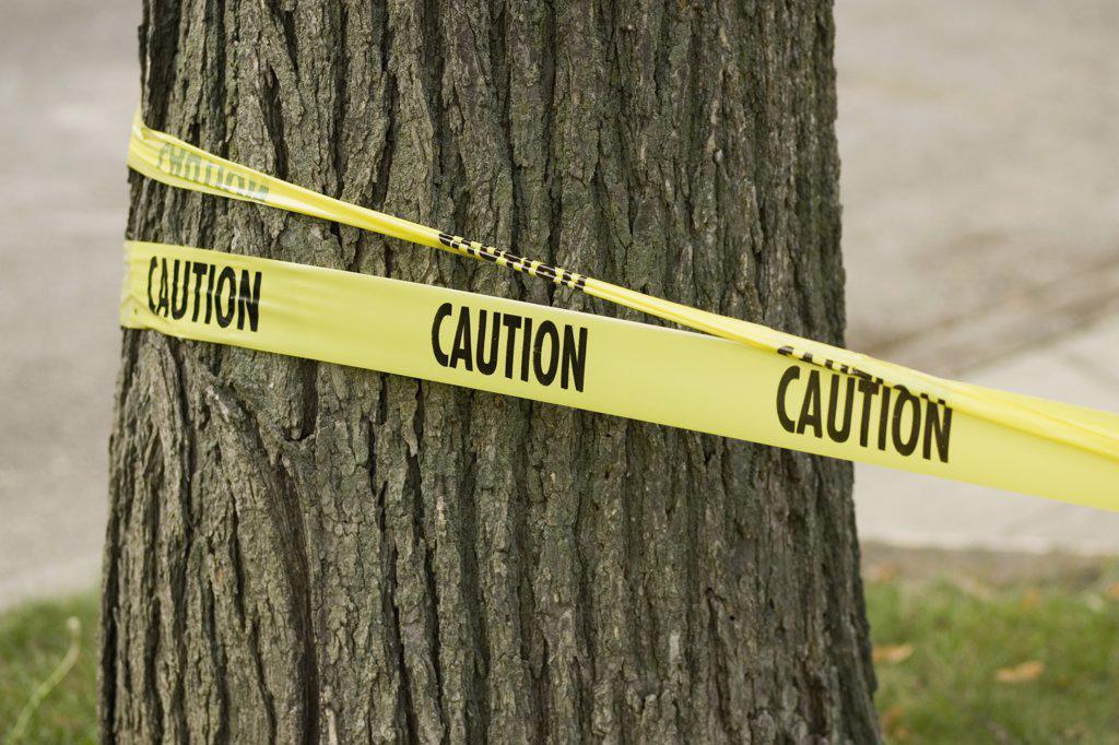 'Caution' tape wrapped around tree : Stock Photo