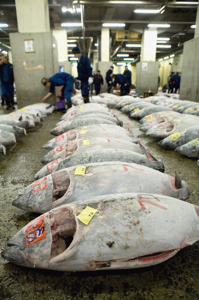 Stock Photo: 1570R-118031 Graded tuna at a market