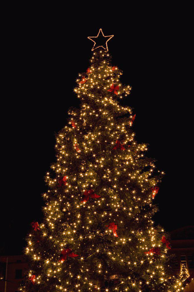 Illuminated Christmas tree at night  : Stock Photo