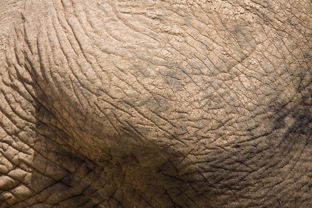 Close up of elephant skin : Stock Photo