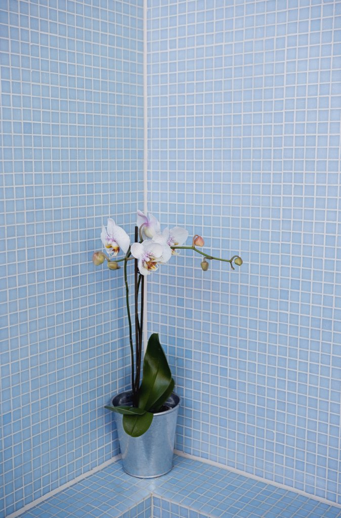 A plant in a blue tiled bathroom : Stock Photo