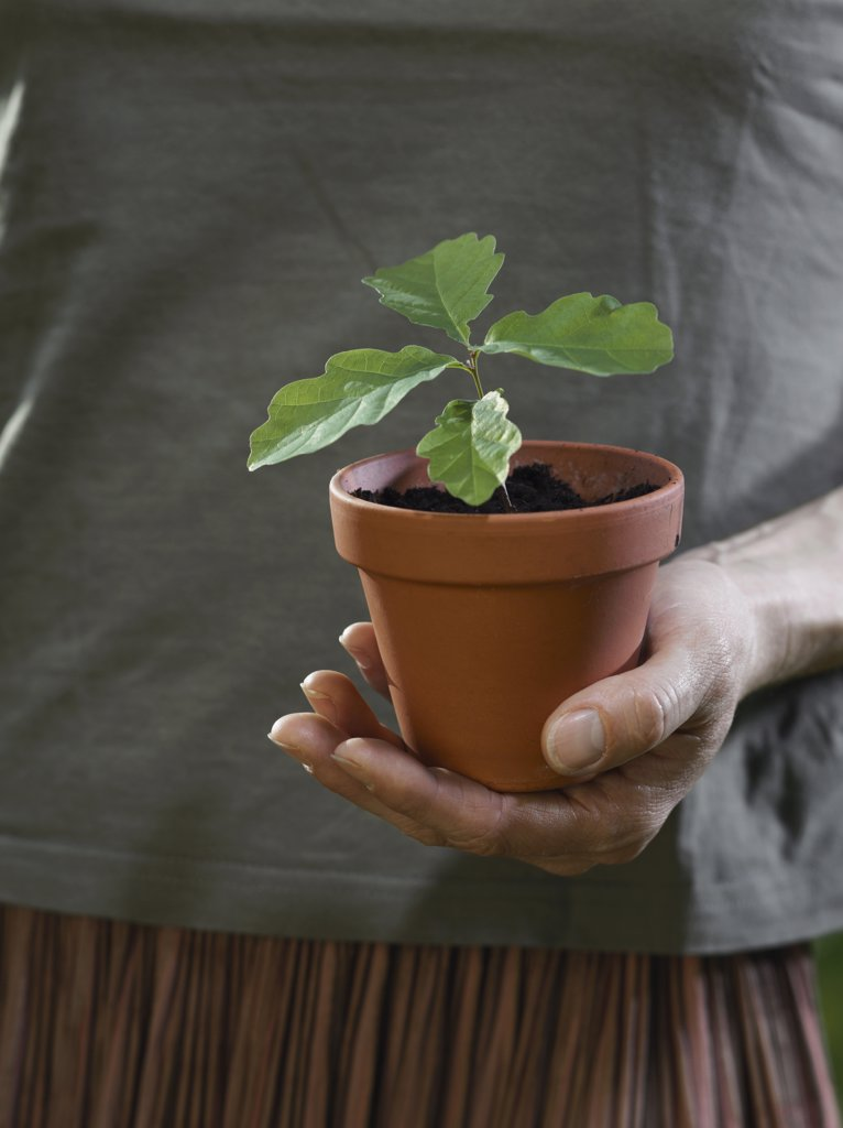 A cupped hand holding a potted plant : Stock Photo