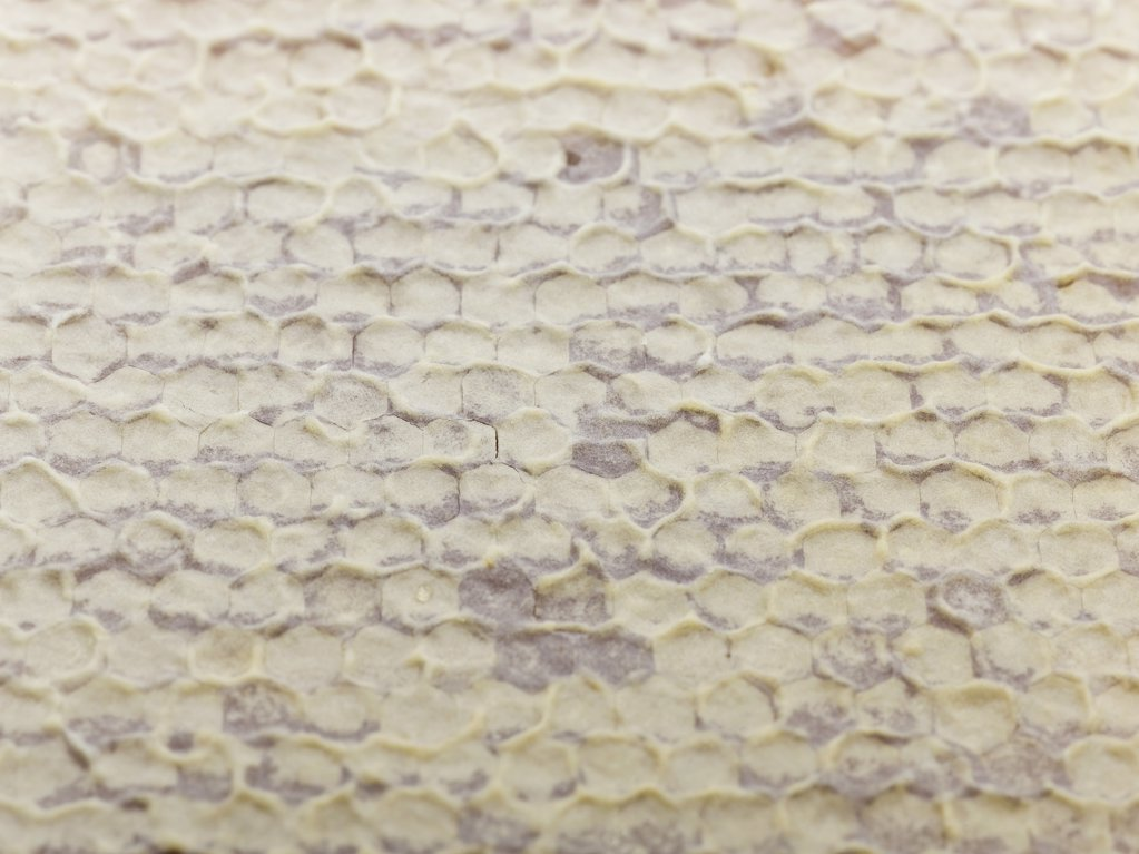 Detail of honeycomb : Stock Photo