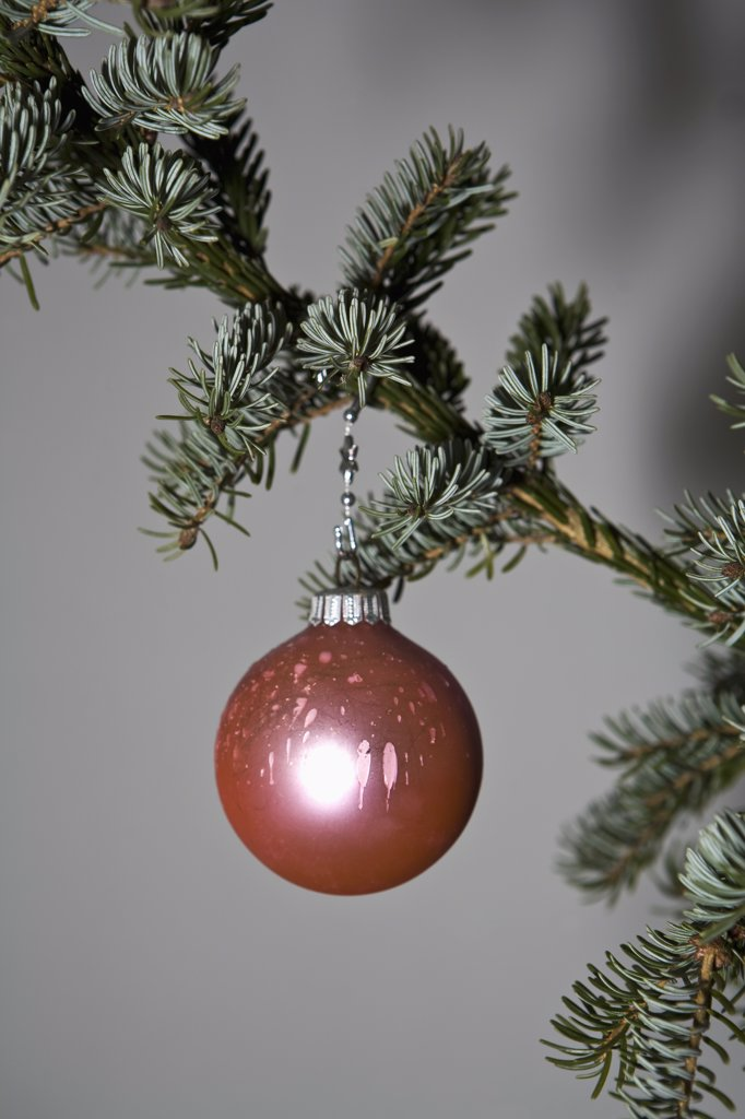 A Christmas ball ornament hanging from a tree branch : Stock Photo