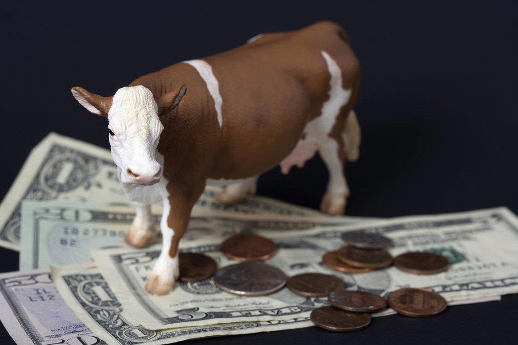Cash cow : Stock Photo
