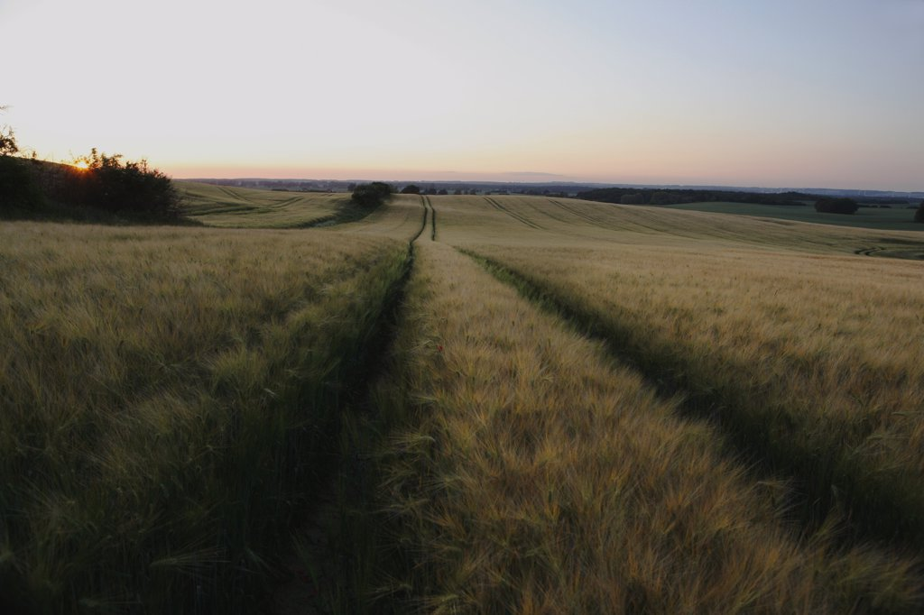 Stock Photo: 1570R-131268 Tracks through a field seen at sunset