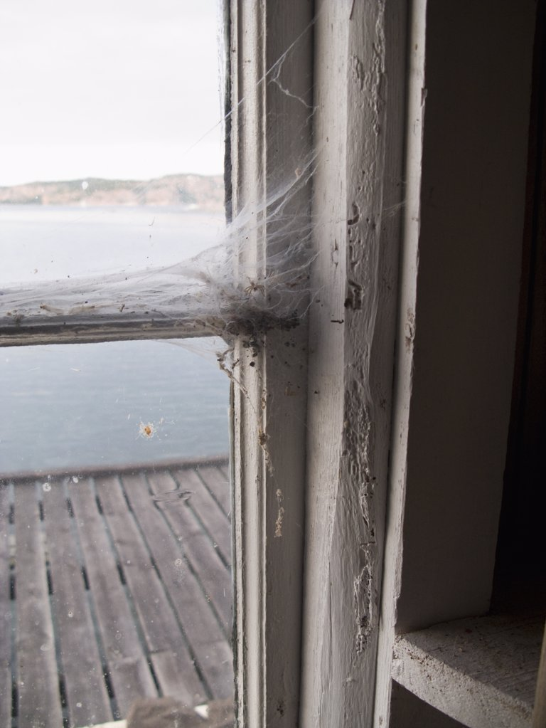 Cobwebs on a window frame : Stock Photo