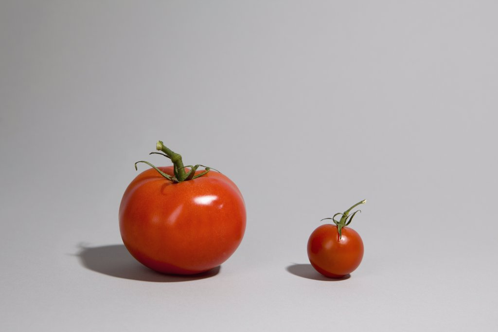 A tomato next to a cherry tomato : Stock Photo