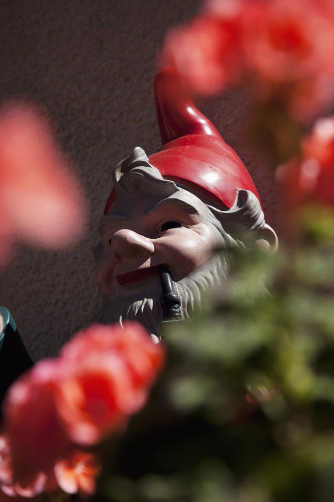 Detail of a garden gnome : Stock Photo