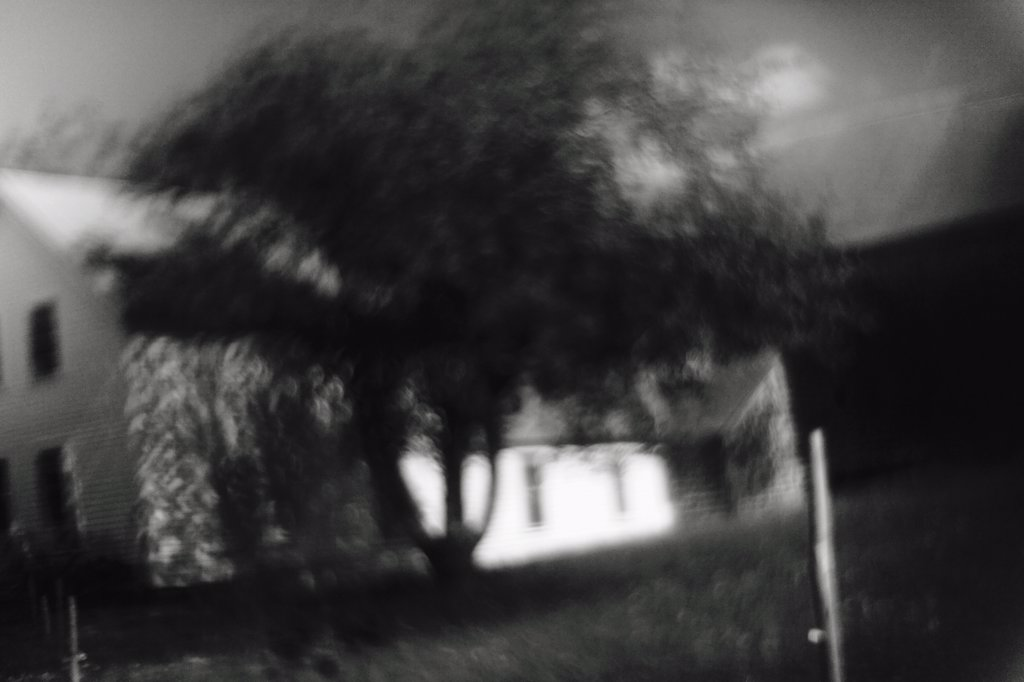 Blurred focus of a tree and white house : Stock Photo