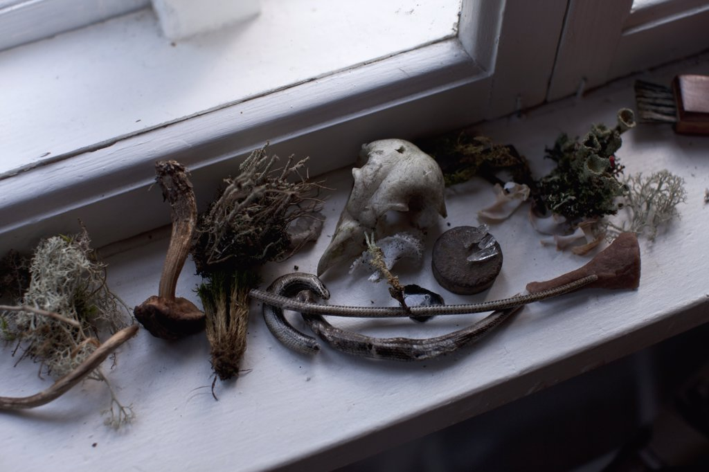 Stock Photo: 1570R-139112 Various dried plants and artifacts on a window sill