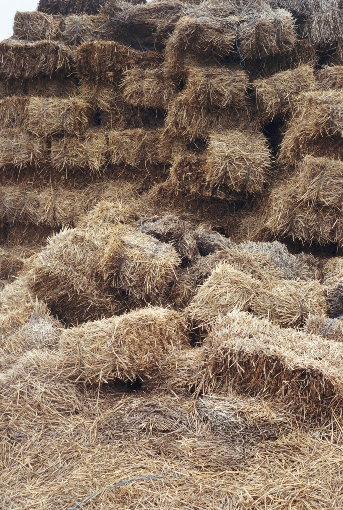 Stock Photo: 1570R-14030 hay fallen from a hay stack