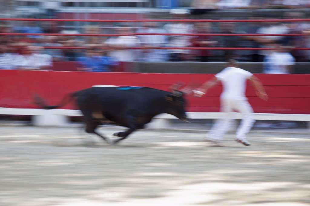 Stock Photo: 1570R-140386 A bull chasing a man in an arena