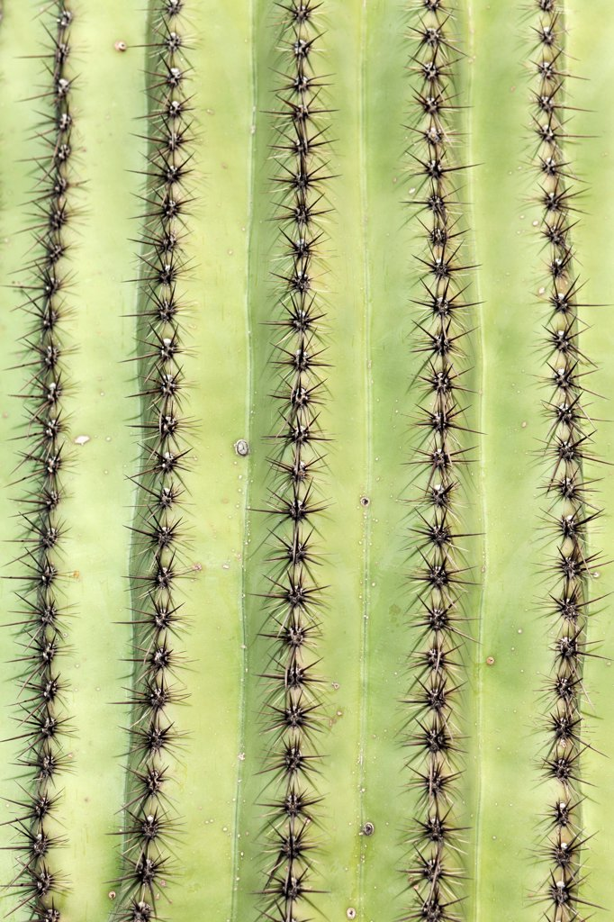 Stock Photo: 1570R-140627 Detail of a cactus