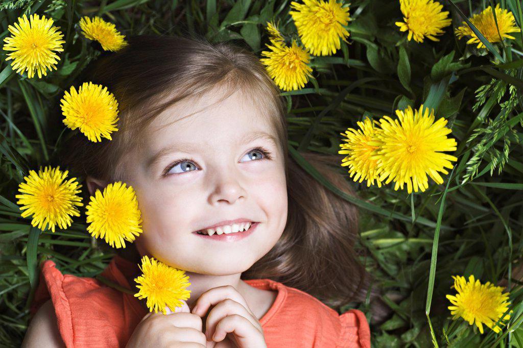 A young girl lying amongst dandelions : Stock Photo