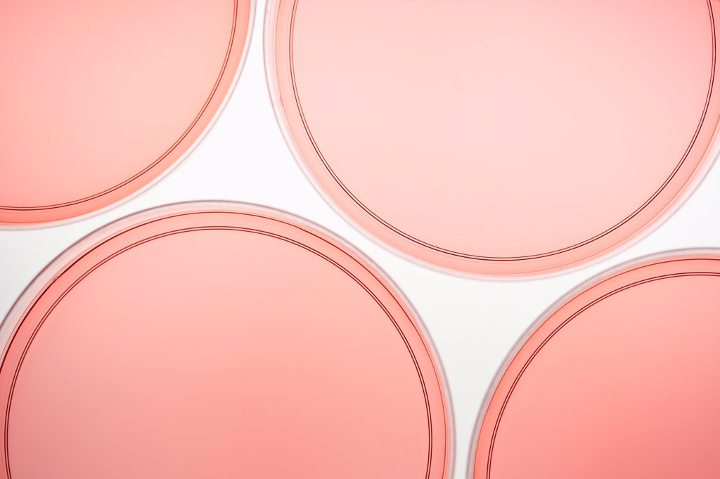 Stock Photo: 1570R-141301 Four petri dishes with pink liquid