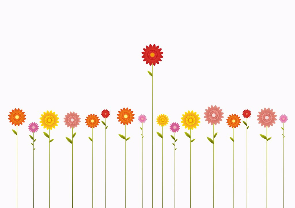 Stock Photo: 1570R-141494 A row of various colored Gerbera Daisies and one towering above them