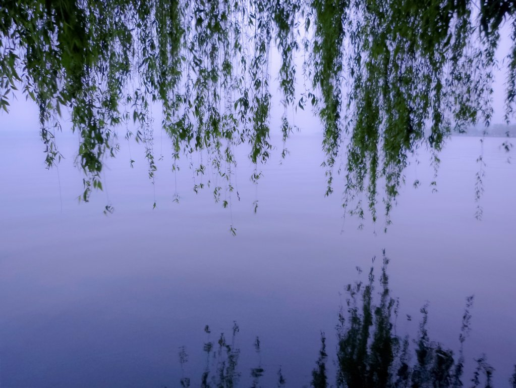 Stock Photo: 1570R-141818 Weeping willow branches hanging over West Lake, Hangzhou, China
