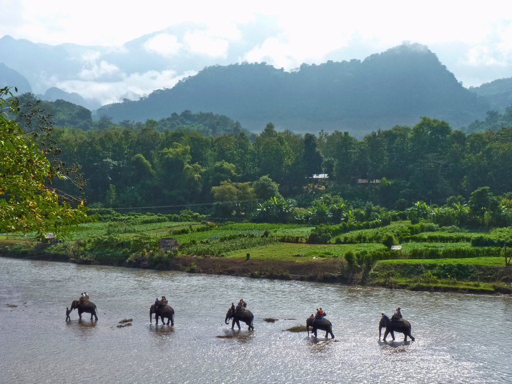 Stock Photo: 1570R-141820 An elephant camp walking in the Mekong River, Luang Prabang, Laos
