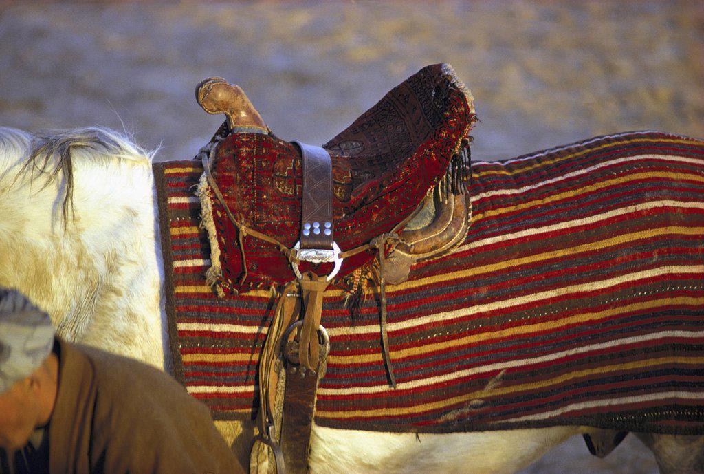 Tibet, saddled horse : Stock Photo