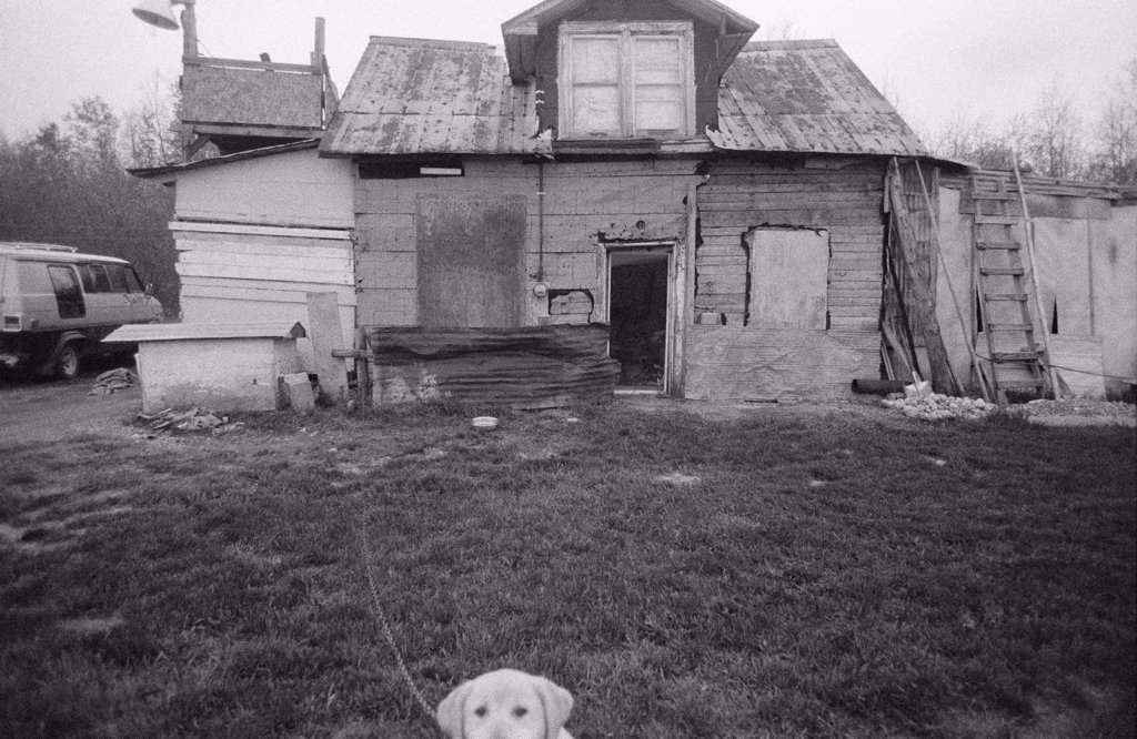 A dog in front of a rickety shack : Stock Photo
