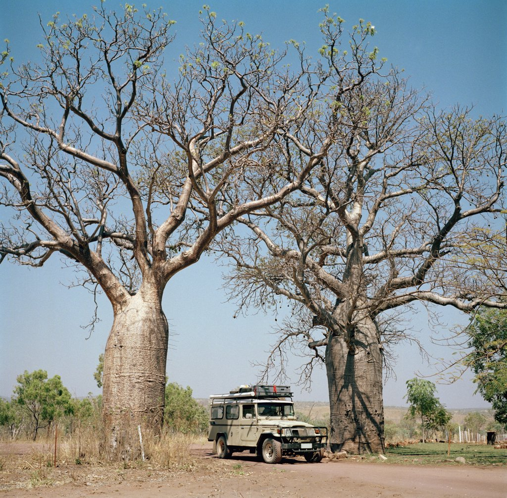 An off-road vehicle in between two baobab trees (adansonia digitata) in Australia  : Stock Photo