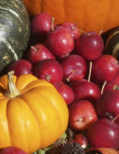 Close-up of a pumpkin and apples : Stock Photo