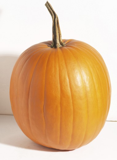 Stock Photo: 1574R-010793 Close-up of a pumpkin