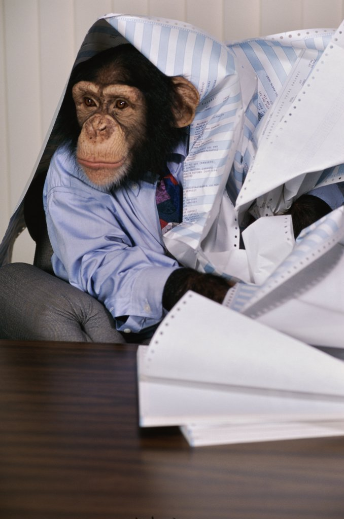 Chimpanzee at an office desk : Stock Photo