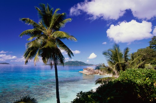 Stock Photo: 1574R-015232 Anse Patates