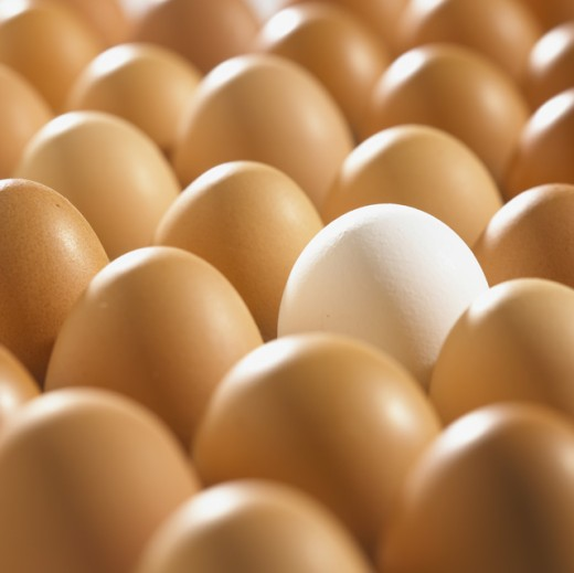 Close-up of eggs : Stock Photo