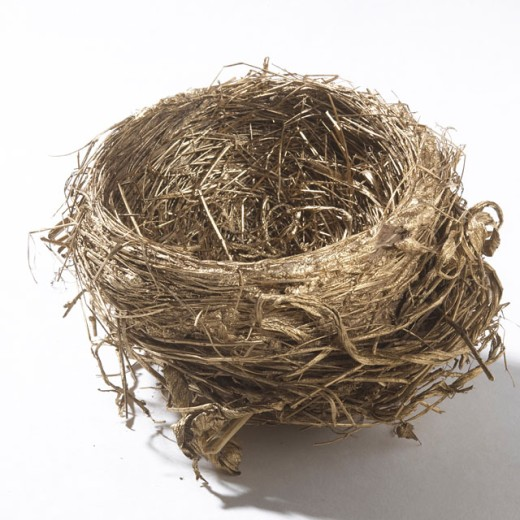 Close-up of an empty bird's nest : Stock Photo