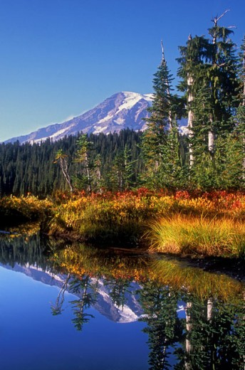 Mount Rainier National Park Washington USA : Stock Photo