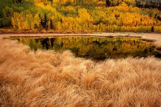 Stock Photo: 1574R-016881 Colorado USA