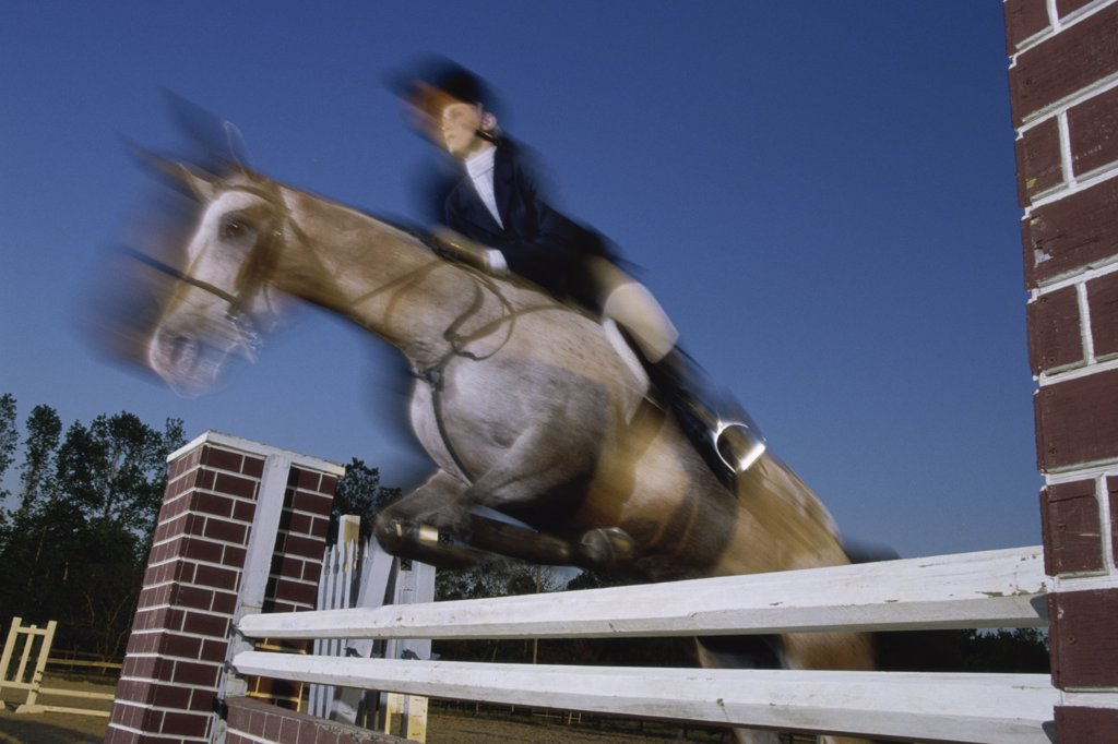 Low angle view of a woman riding a horse over a hurdle : Stock Photo