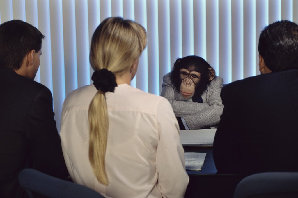Stock Photo: 1574R-018076A Rear view of two businessmen and a businesswoman sitting in front of a chimpanzee