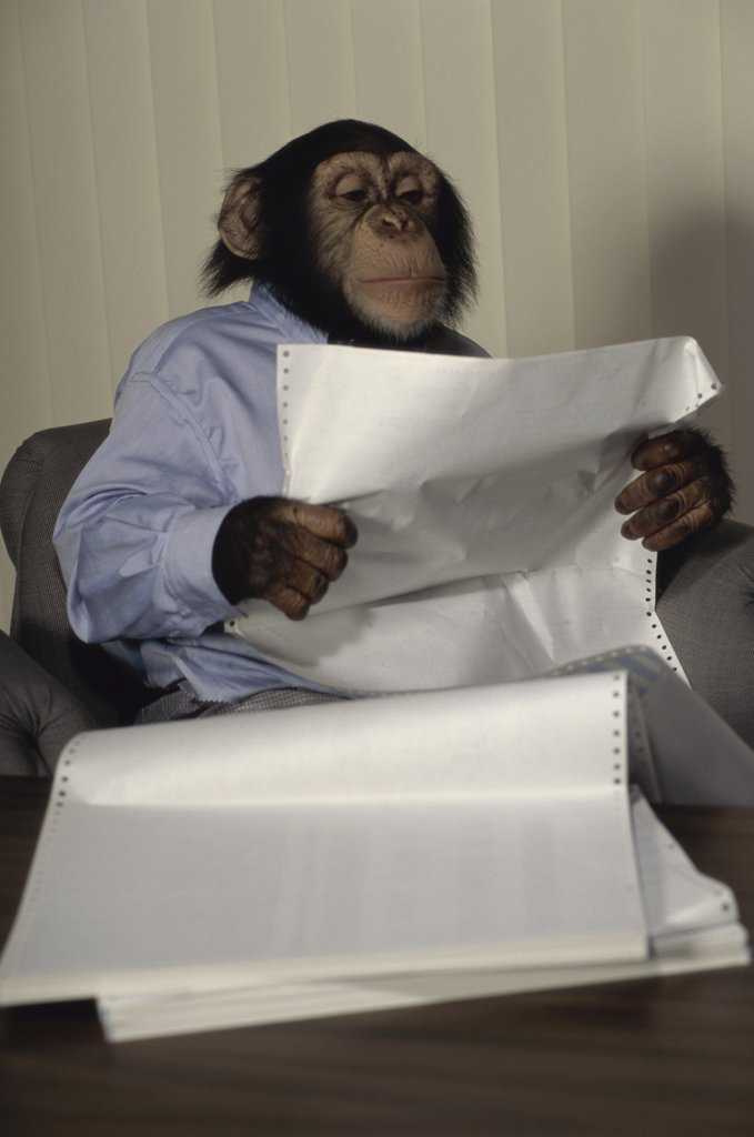 Close-up of a chimpanzee reading a document : Stock Photo