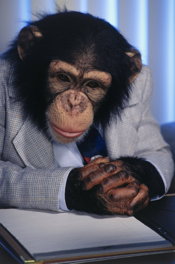Stock Photo: 1574R-018078A Close-up of a chimpanzee reading a document