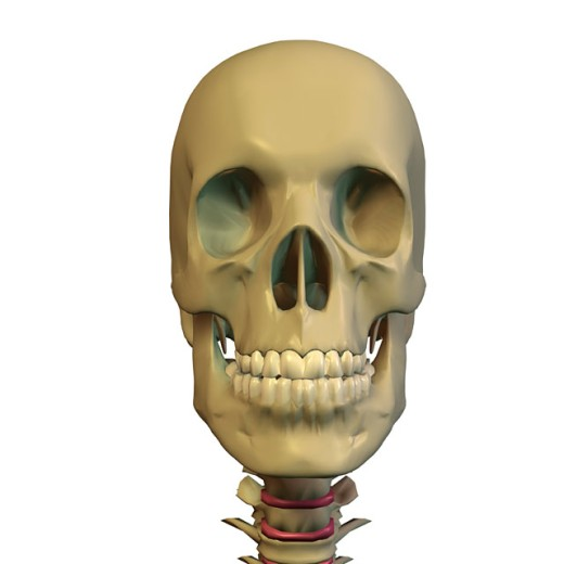 Close-up of a human skull : Stock Photo