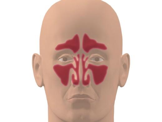 Stock Photo: 1574R-018929 Human Nasal Cavity