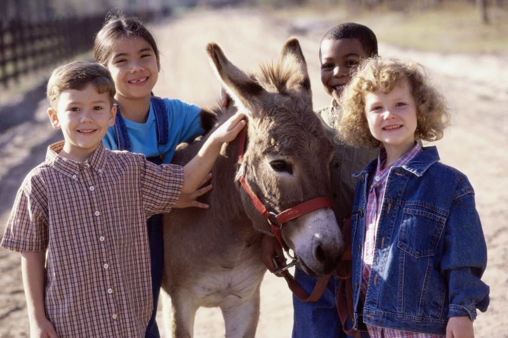 Portrait of a group of children standing with a donkey : Stock Photo