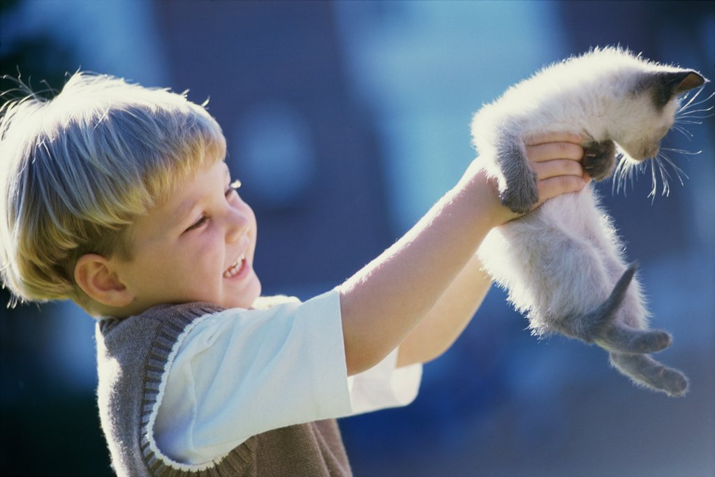 Side profile of a boy carrying a Siamese kitten : Stock Photo
