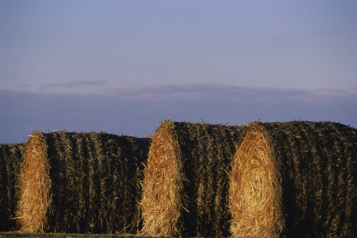 Stock Photo: 1574R-09937 Bales of hay