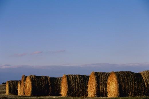 Stock Photo: 1574R-09938 Bales of hay